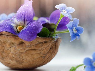12 خاصیت گل بنفشه برای سلامتی